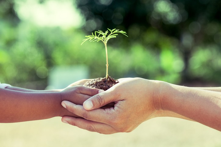 Child little girl and parent holding young plant in hands together as save world concept in vintage color tone